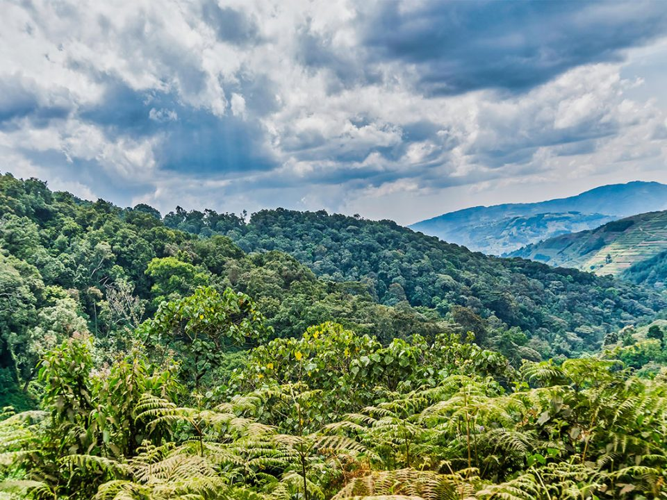 Travel guide for Bwindi impenetrable National Park
