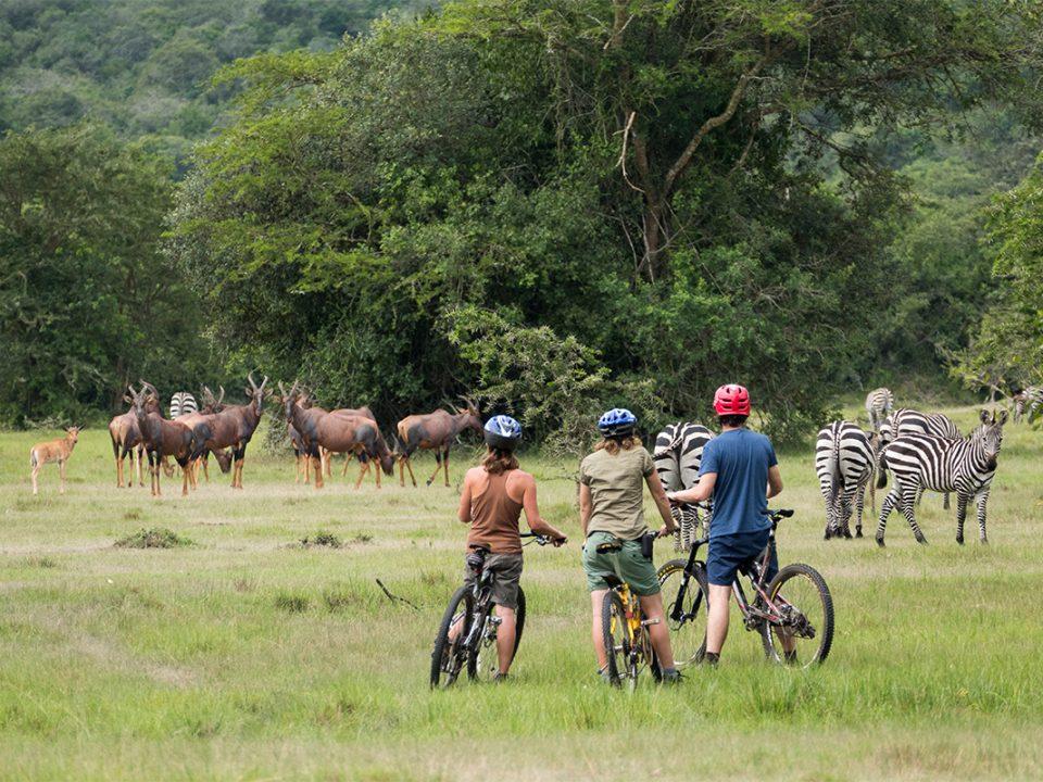 8 Days Uganda cycling tour and wildlife safari