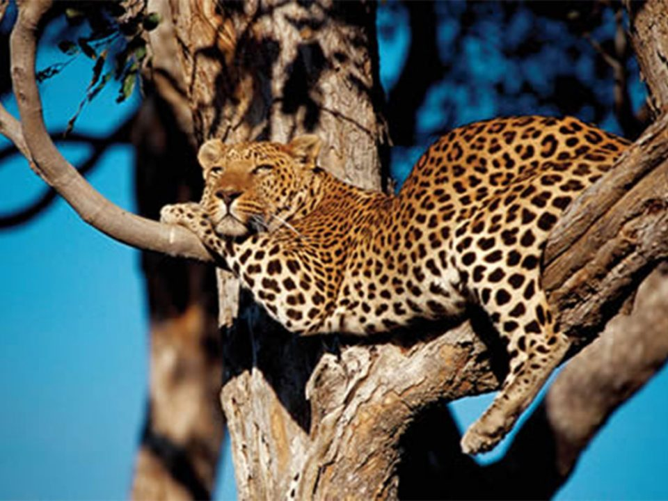 Explore Mwingi game reserve