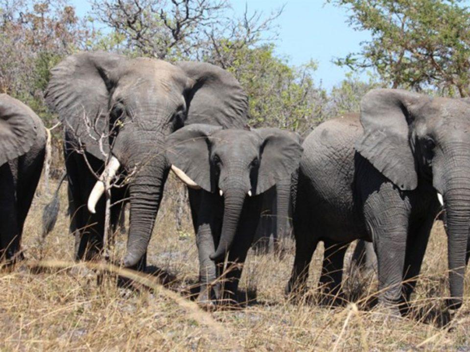Explore Kasanka national park wildlife