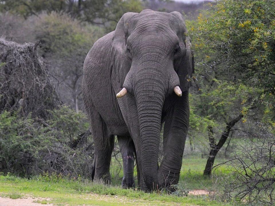 Filming Elephants in Uganda