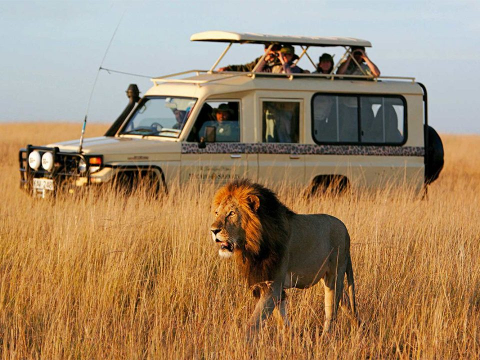 First time on East African safari