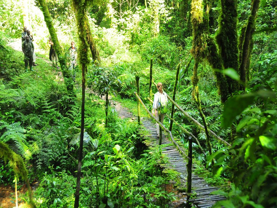 Forest walks and hiking trails in Nyungwe forest National Park