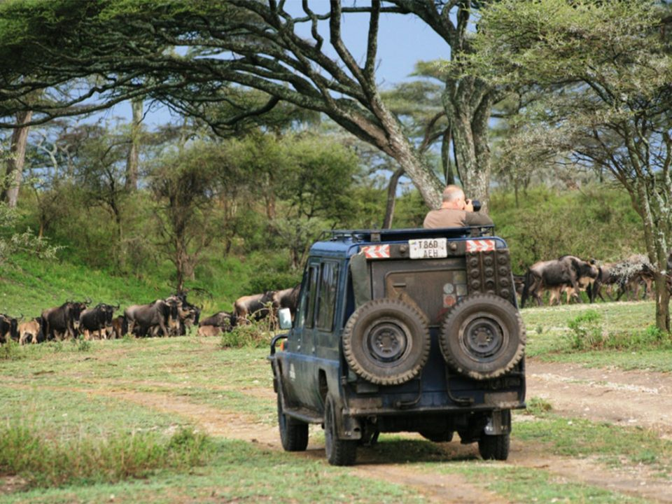 Game viewing in Serengeti