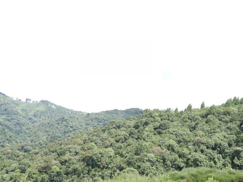 Wildlife In Gishwati National park