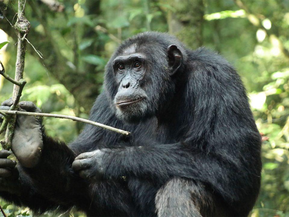 Safari tours to gombe National park