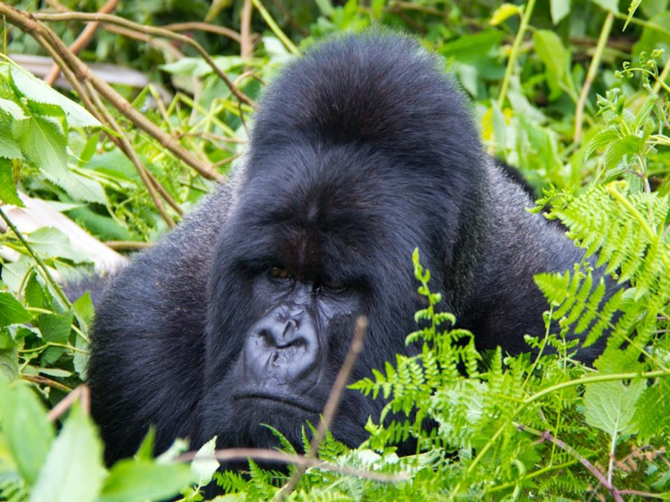 Gorilla trekking equipment, camera and binoculars