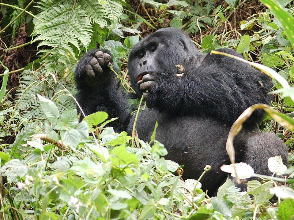 Gorilla highlands Uganda