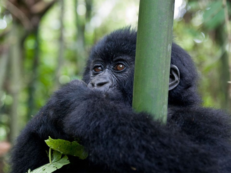 Gorilla trekking & Lake Victoria boat cruise