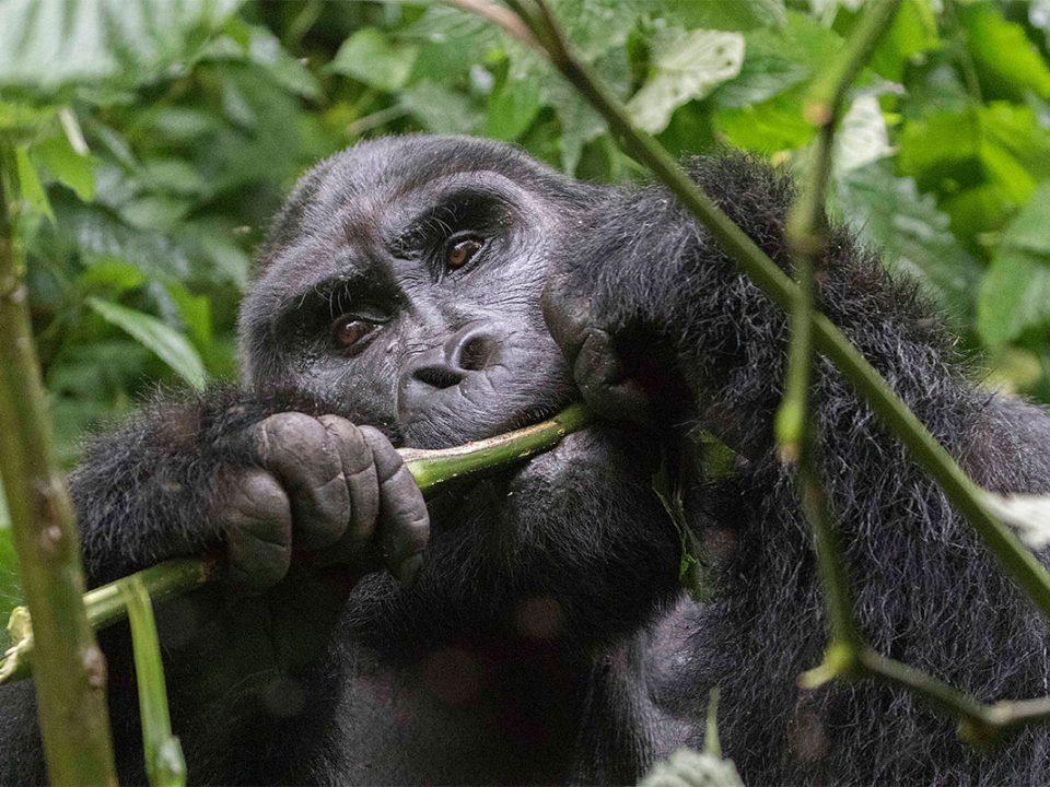 Gorilla tracking regions in Bwindi