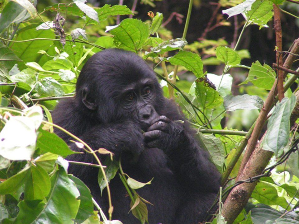 Rwanda gorilla tours from lake Kivu