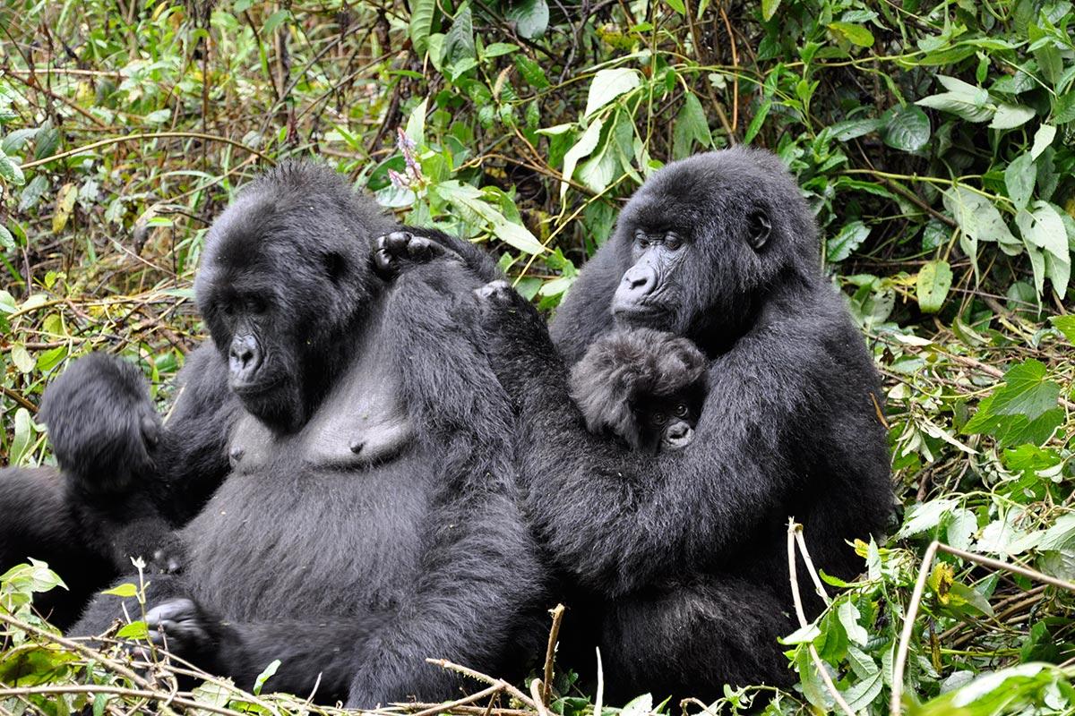 Uganda adventure travel holidays