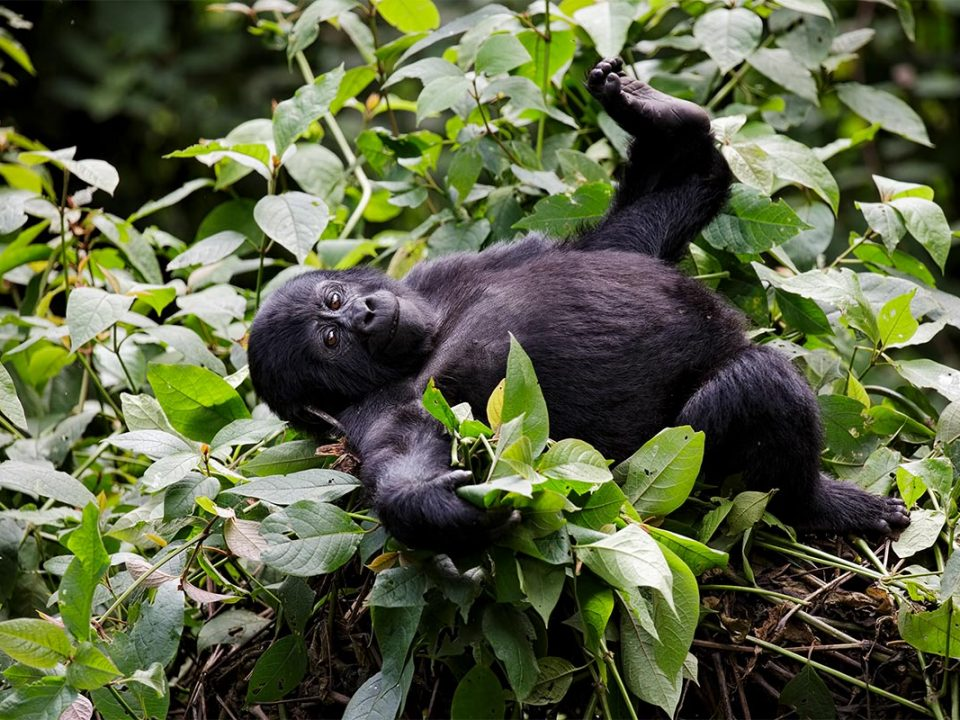 gorilla trekking in low season