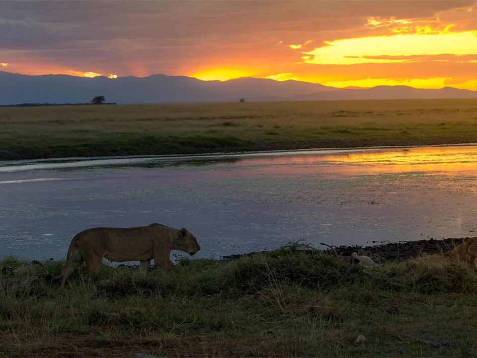 Guide to visiting Amboseli national park