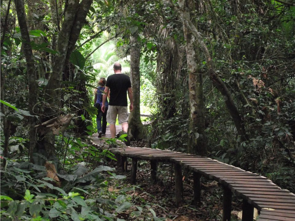 Guided forest walks in Kibale National Park