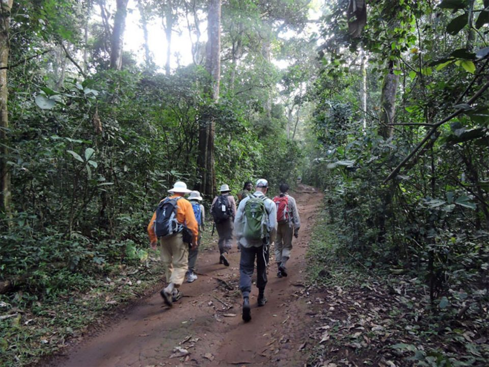 Guided night walks in Kibale forest National Park