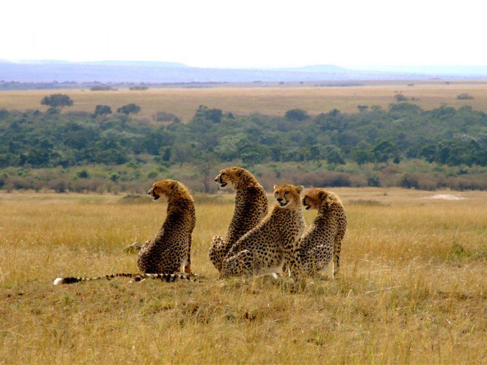 How many days do I need on safari in Masai Mara