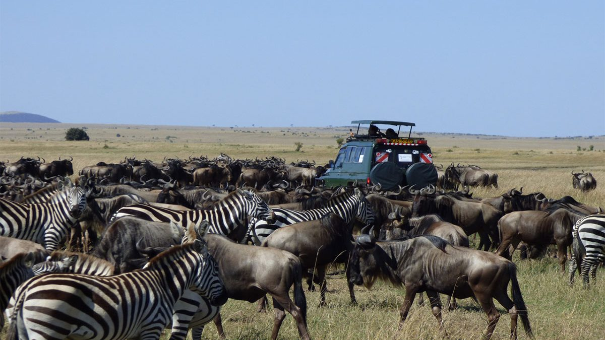 How much does a Masai mara safari cost