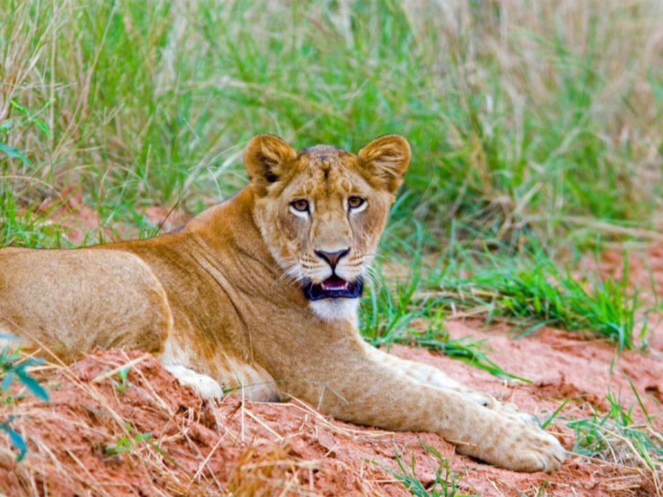 How to book a Uganda safari