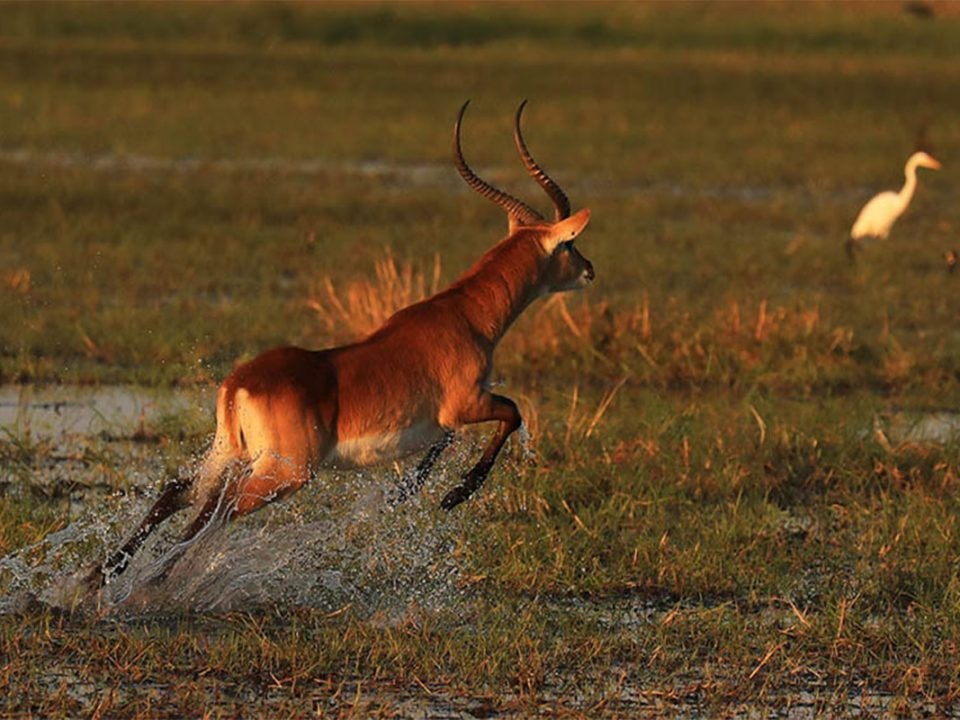 How to get to Kafue National Park