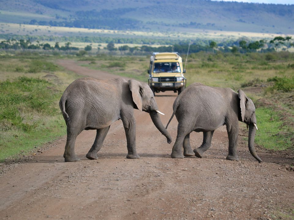 How to plan a safari to kenya