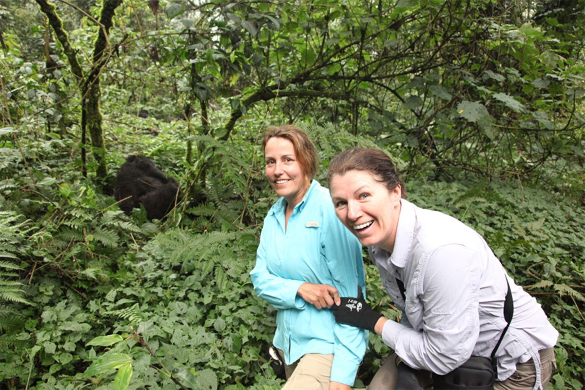 How to see mountain gorillas in the wild