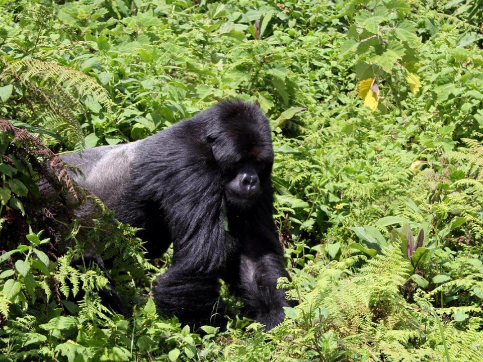 I gorilla trekking worth the money