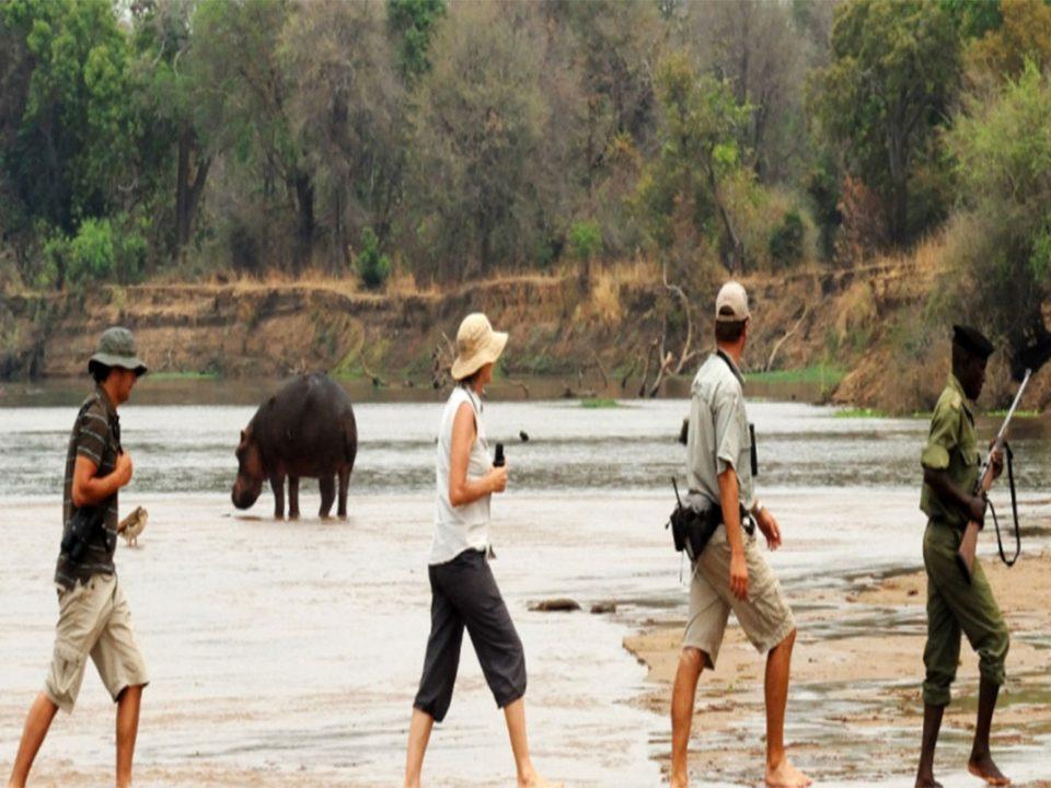 Kasanka walking safaris in Zambia
