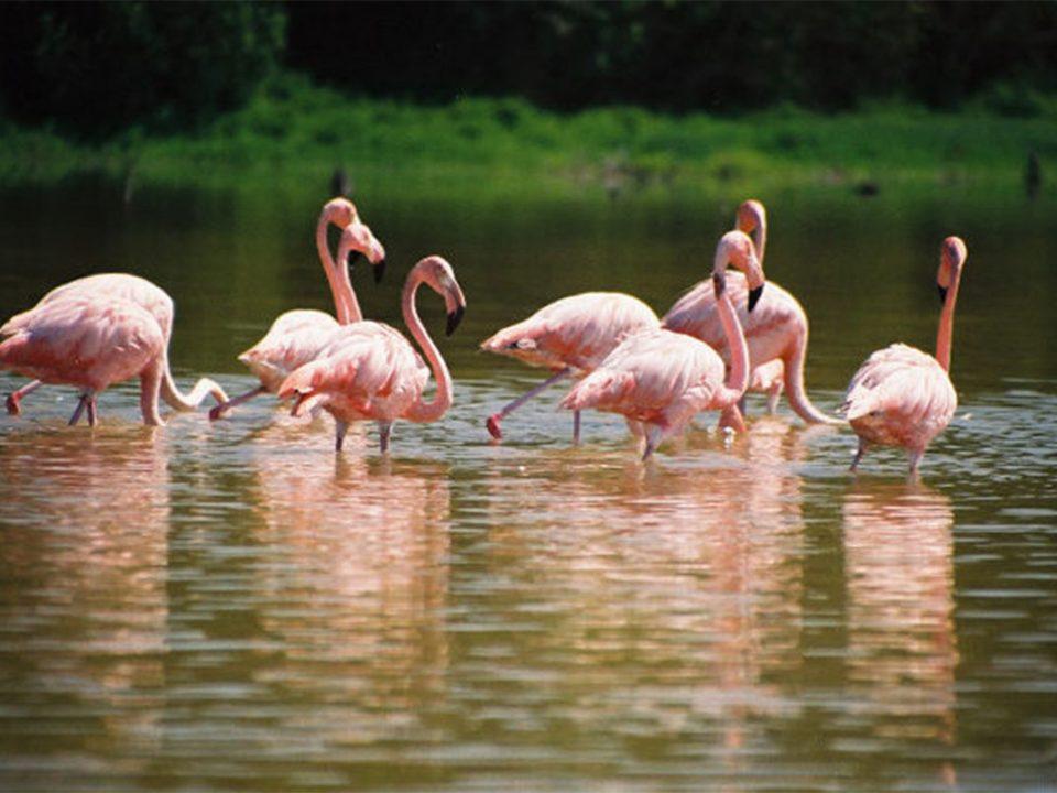 Lake Bagusa flamingos and salt mines