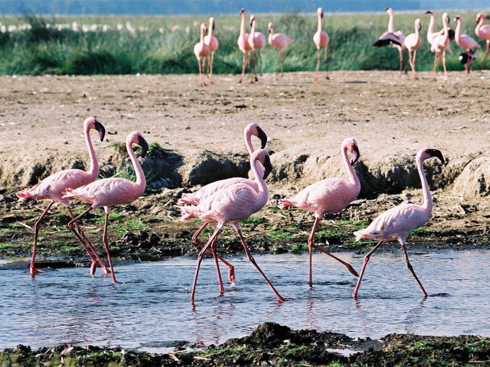 Lake Maseche flamingos and salt mines