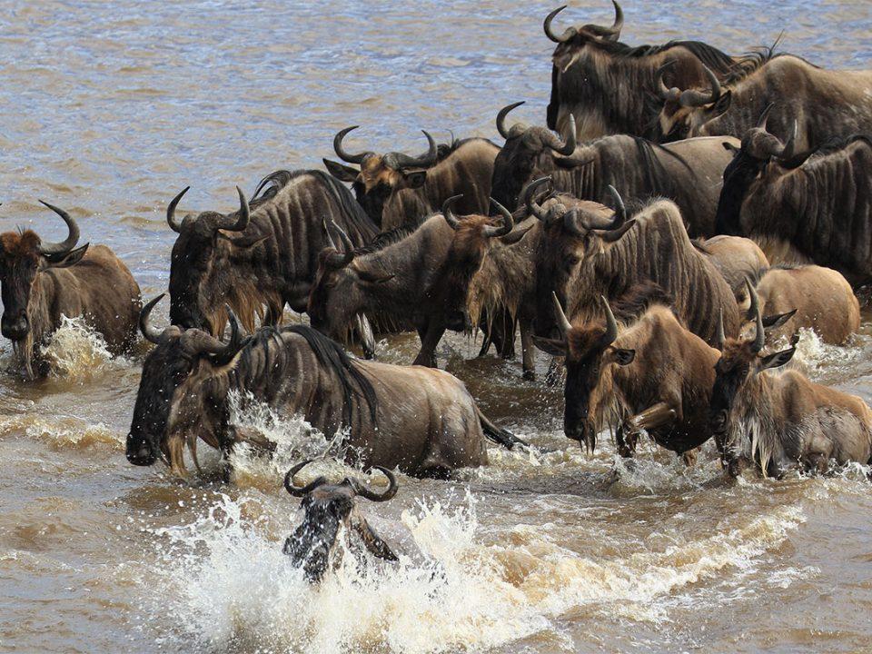 Luxury Tanzania safaris & tours