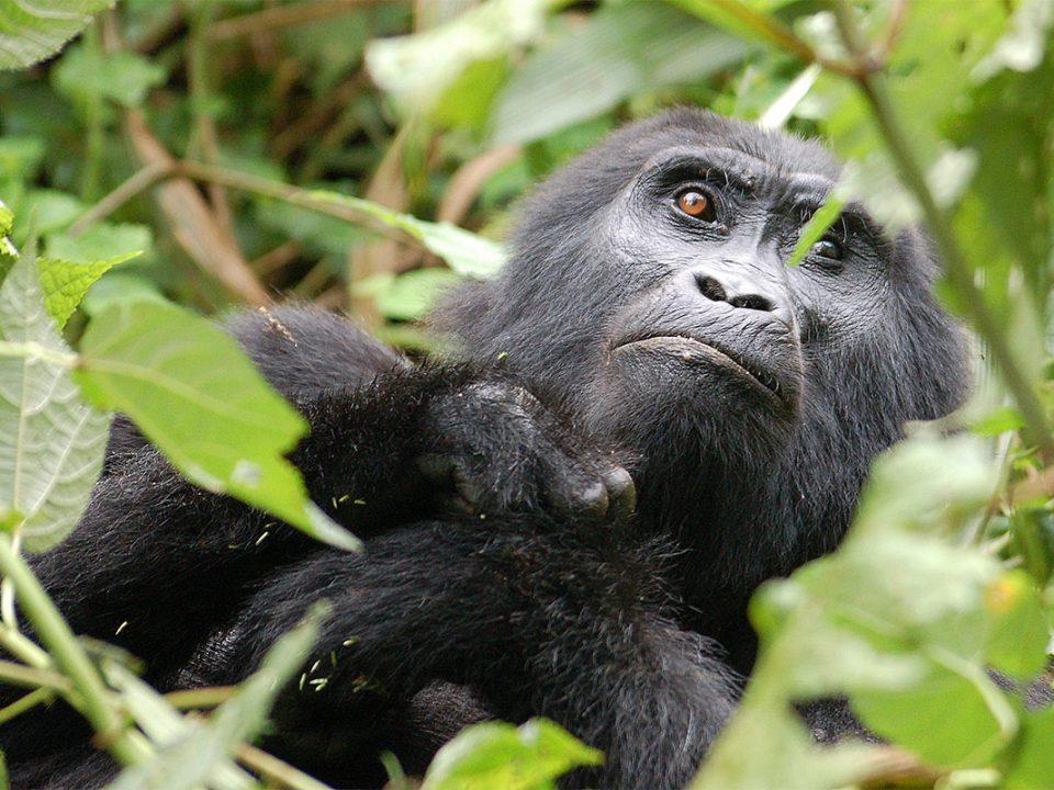 Luxury gorilla tracking & lake bunyonyi