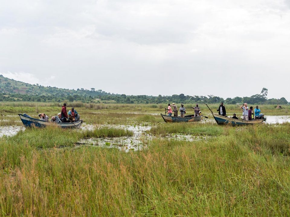 Mabamba swamp birding adventures in Uganda