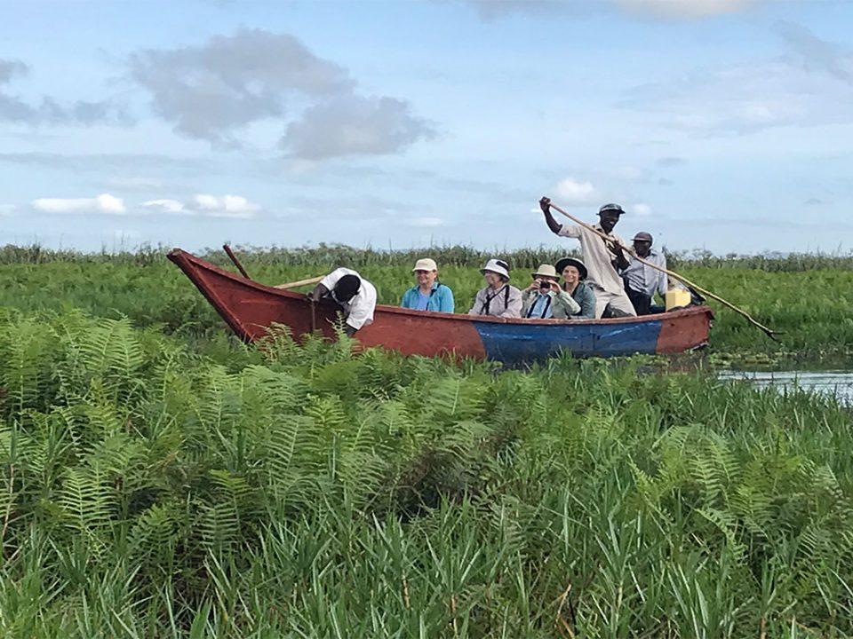 Mabamba swamp on Lake Victoria