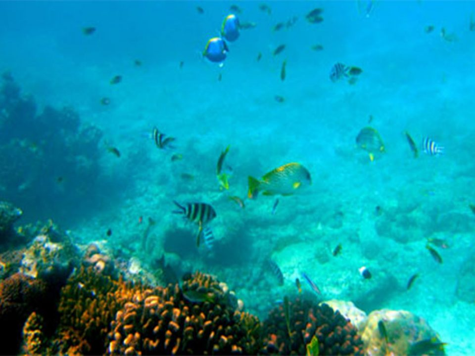 Safaris and tours to Marine National Park