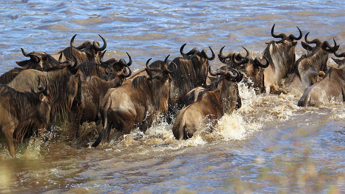 Masai Mara adventure & Uganda gorilla tracking