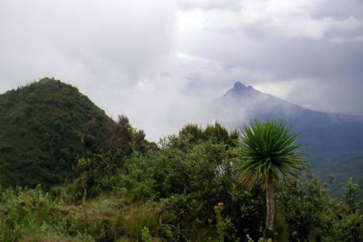 Mgahinga gorilla weather & climate