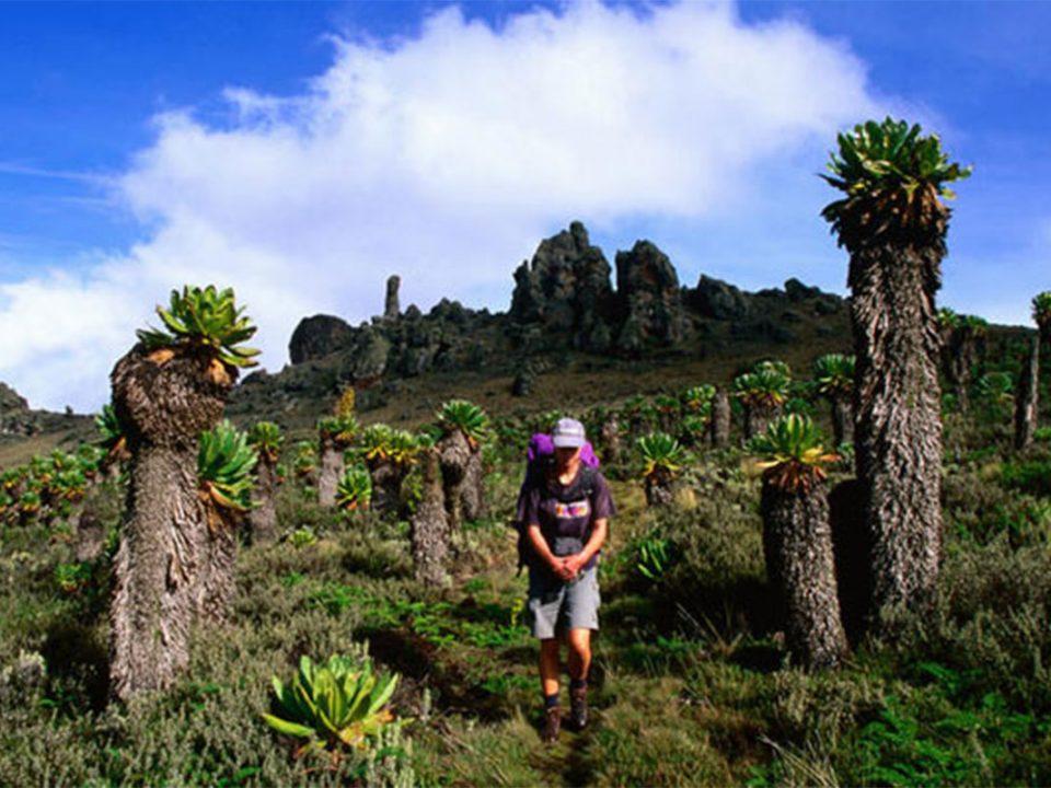 Explore Mount Elgon National Park