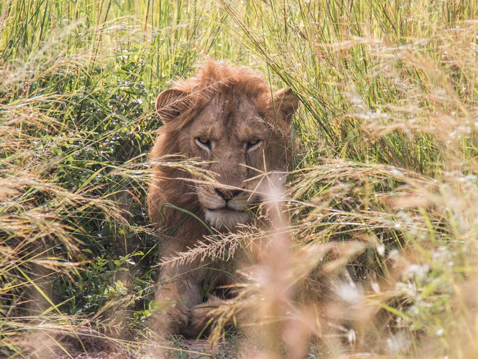 Murchison falls 3 days falls and game safari
