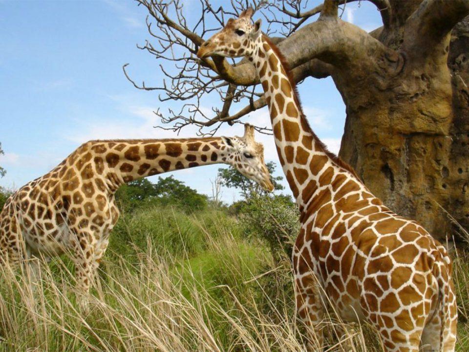 Explore Mwea game reserve