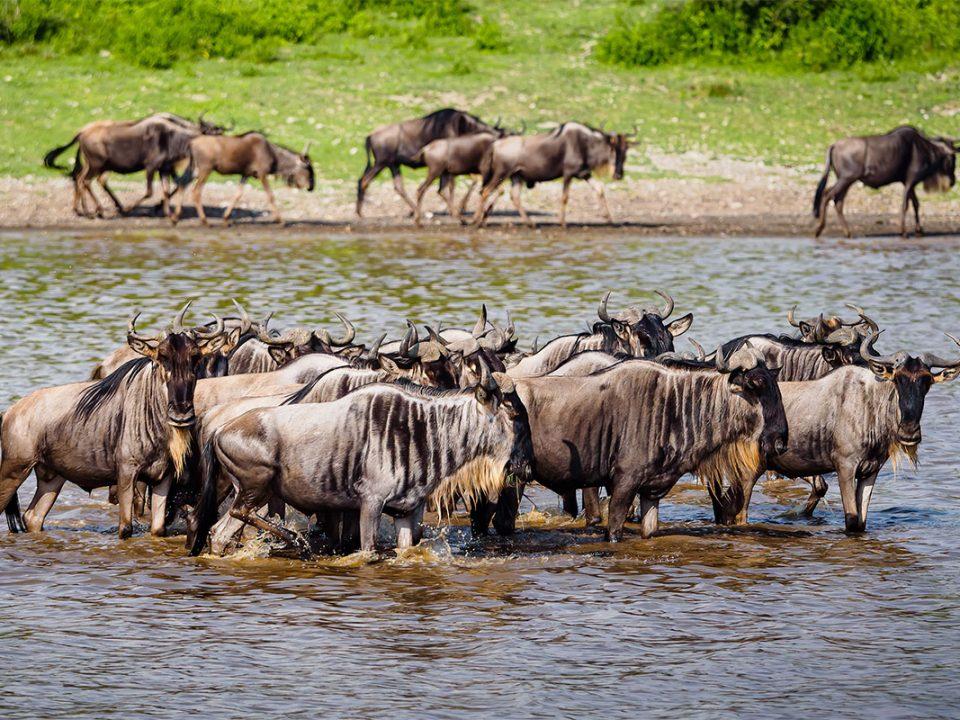 Ndutu area serengeti Tanzania