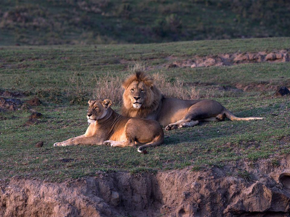 Ngorongoro crater safari tours in Tanzania