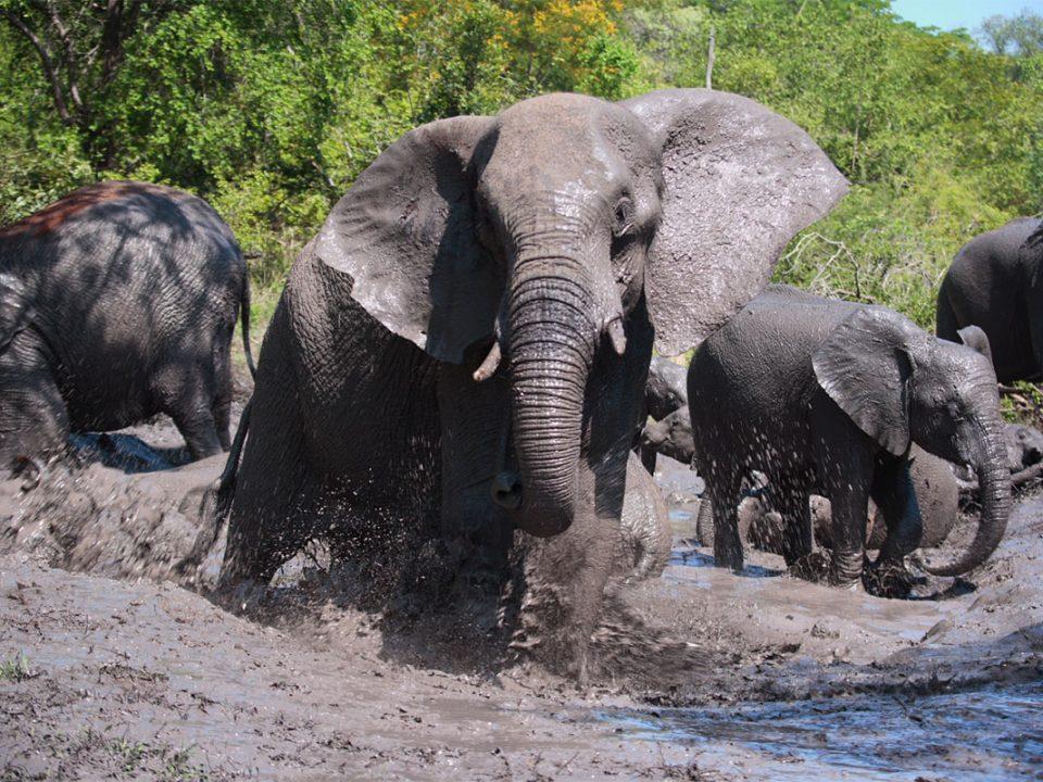Organizing a big five safari in Uganda