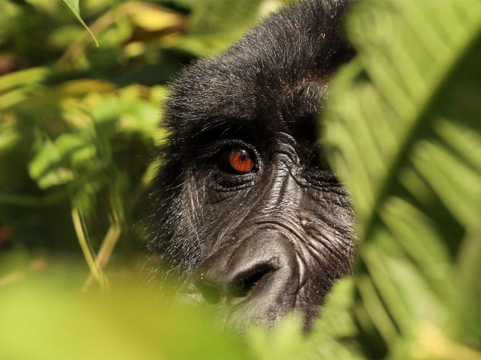 Practical guide to filming in Bwindi forest National park