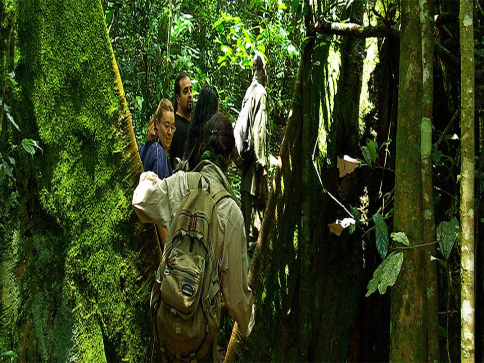 Rubanga guided forest walks