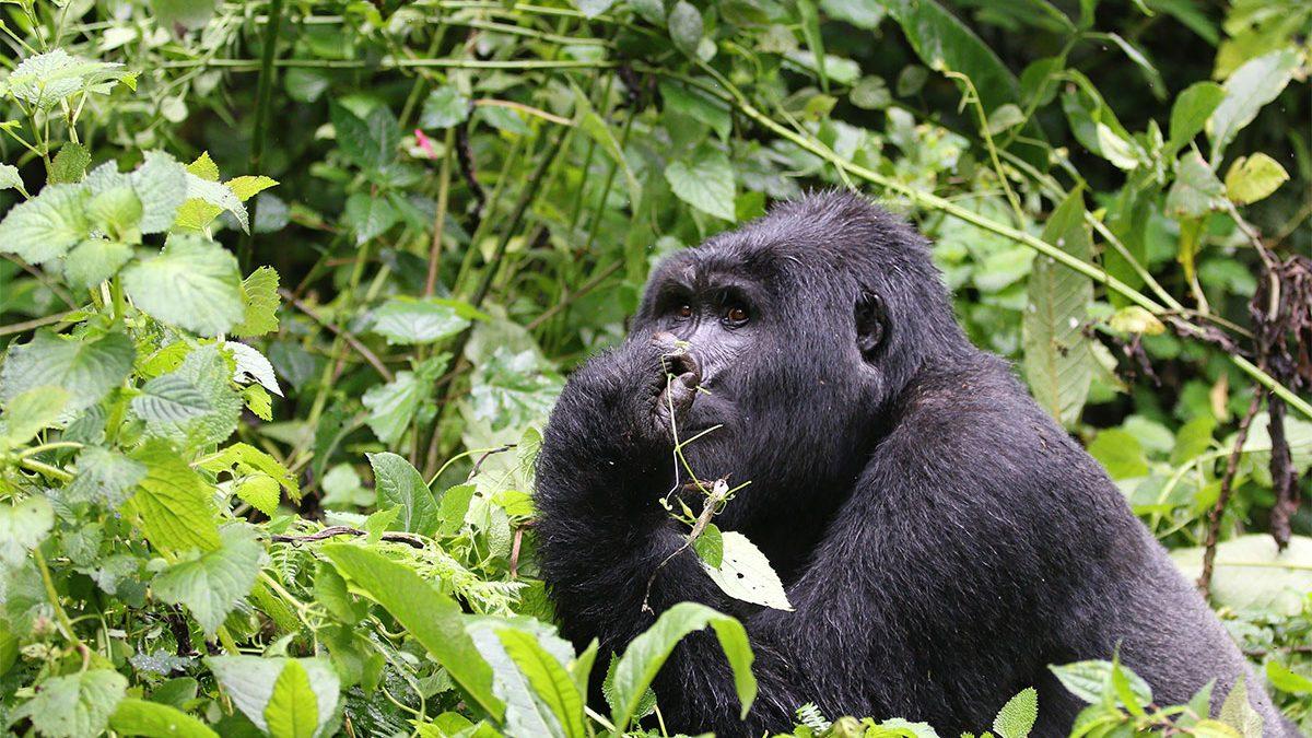 Ruhija region of Bwindi impenetrable National park