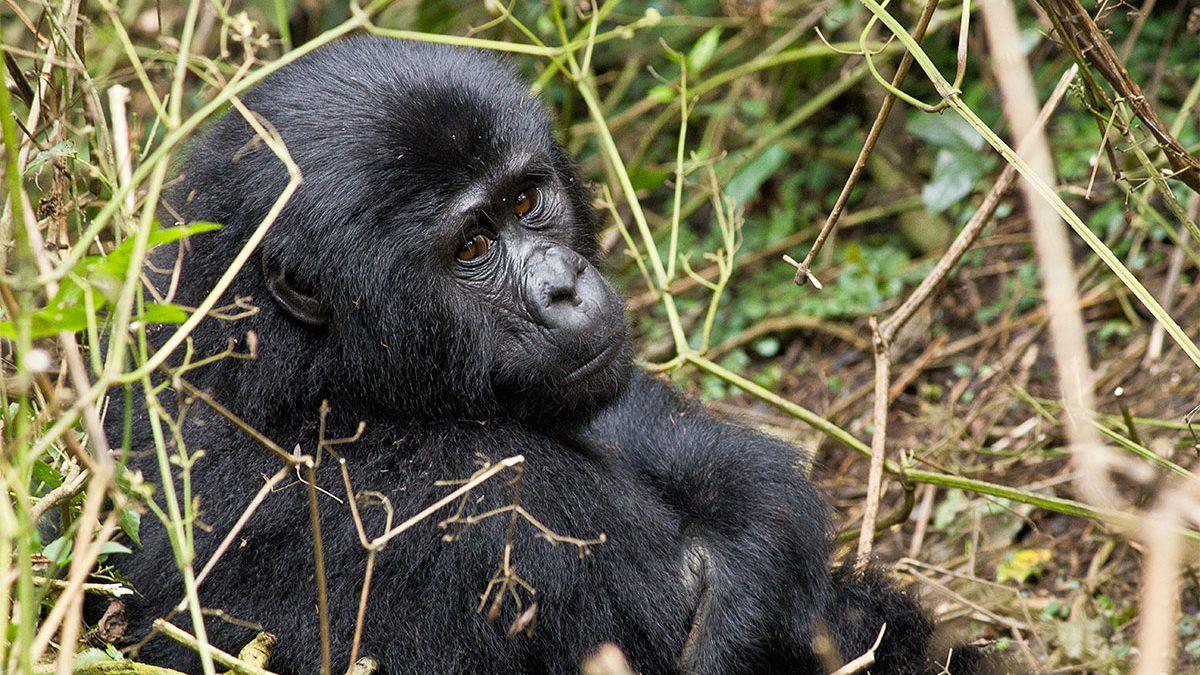Rushaga region of bwindi impenetrable national park