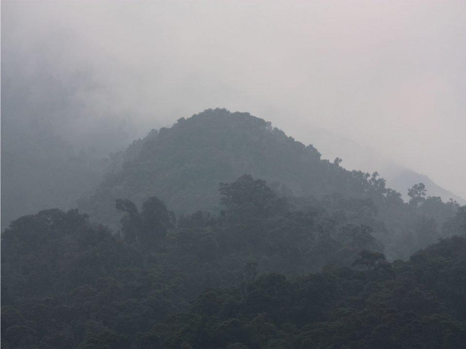 Exclusive Rwanda gorillas in the mist