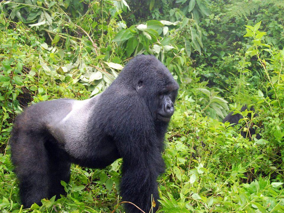 Rwanda road trip Gorilla tours