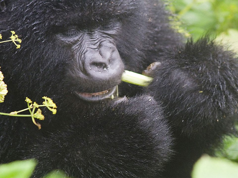 Rwandatravel and gorilla trekking tours